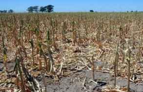 A la escasez de lluvias se suma un alto riesgo de incendios forestales en gran parte del territorio nacional