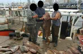 Esperan acciones de la Dinara por pesca de corvinas con redes en la boca del arroyo Maldonado