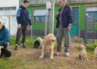 Comienza En San Carlos curso de adiestramiento de perros guías para ciegos