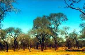 Invitan a participar en taller sobre restauración y conservación del bosque nativo
