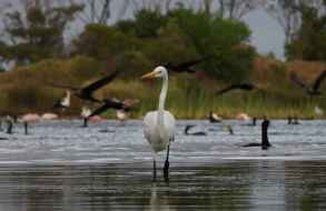 Birdwatching Punta del Este fue declarada de Interés por el municipio local