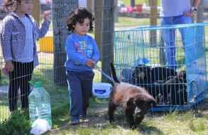 Se realiza la clásica jornada de adopción de mascotas en el Parque La Loma