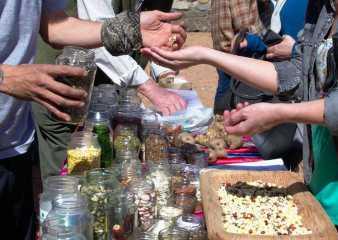 11° Encuentro de Semillas Orgánicas el sábado en Sauce de Portezuelo